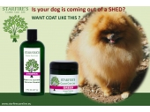 Is Your dog is coming out of shed?